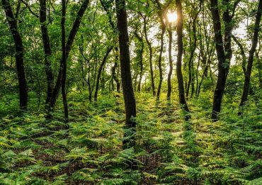 minicamping-bosrijke-omgeving-02